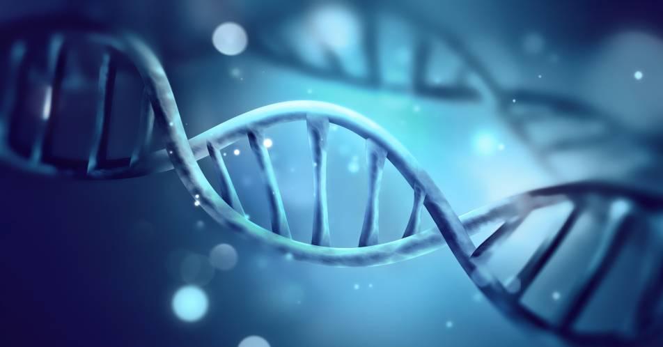 Seltene+lysosomale+Speichererkrankungen%3A+Diagnostik+Morbus+Gaucher