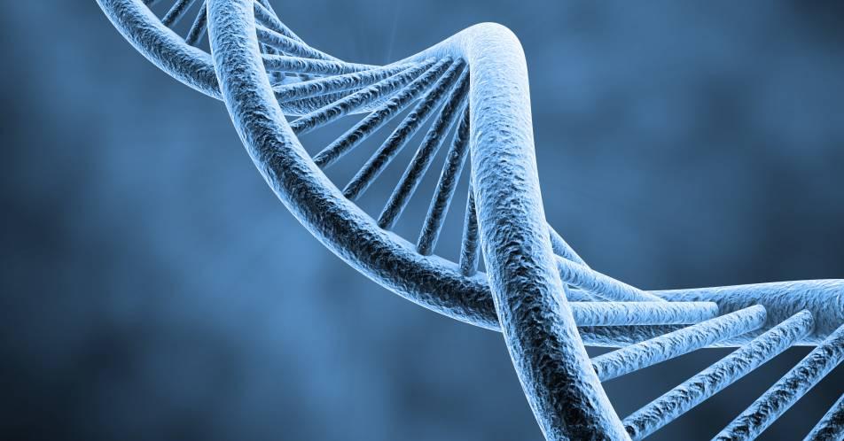 Polycythaemia+vera%3A+Die+Bestimmung+einzelner+DNA-Varianten+erm%C3%B6glicht+eine+effektivere+Behandlung