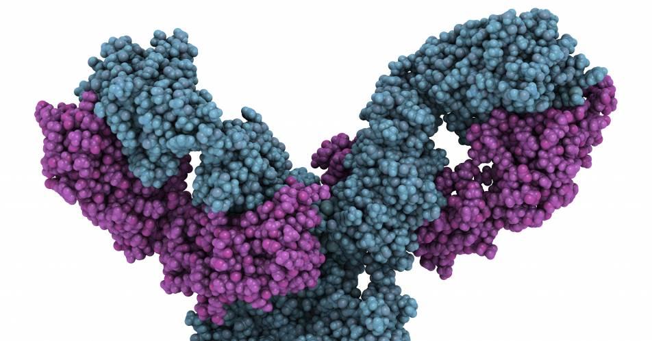 Neuer+Anti-ILT4-Antik%C3%B6rper+zeigt+in+Kombination+mit+Pembrolizumab+erste+vielversprechende+Ergebnisse+bei+fortgeschrittenen+Tumoren