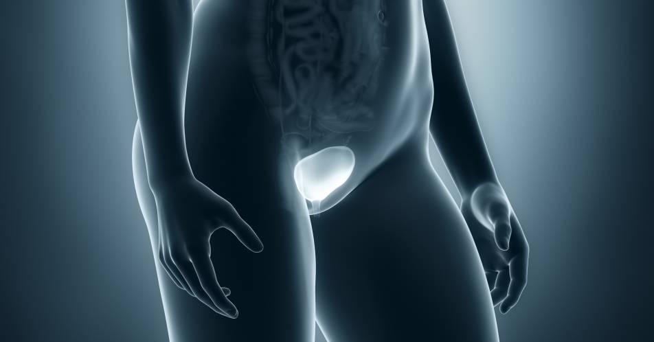 Lokal+fortgeschrittenes+oder+metastasiertes+Urothelkarzinom%3A+CHMP+empfiehlt+Zulassung+f%C3%BCr+Avelumab+als+Erstlinien-Erhaltungstherapie