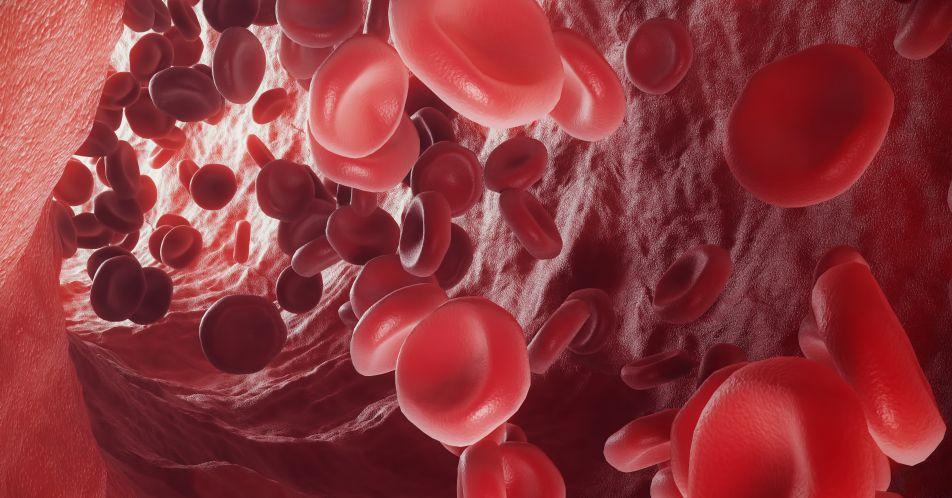 BEYOND-Studie%3A+Luspatercept+bei+nicht-transfusionsabh%C3%A4ngiger+%CE%B2-Thalass%C3%A4mie