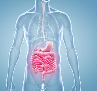 Darmkrebs – Erkrankung in jungen Jahren kann auf eine erbliche Veranlagung hindeuten