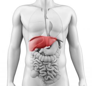 Bis zu 40 Prozent mehr Leberkarzinome entdecken – dank Ultraschallverfahren mit kombinierten Bluttests