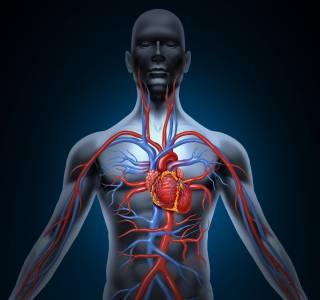 Krebstherapien+k%C3%B6nnen+Herz+und+Gef%C3%A4%C3%9Fe+sch%C3%A4digen%3A+Wie+sch%C3%BCtzt+man+Patienten%3F