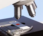 Starke Hilfe: 7,65 Millionen Euro für den Kampf gegen Leukämie