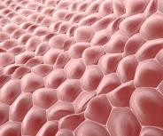Heller Hautkrebs – eine unterschätzte Erkrankung?